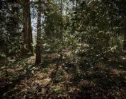 Unreal Engine 5 İle Işın İzlemeli Orman Grafikleri Harika Görünüyor!